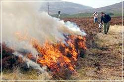 Experimental muirburn management fire